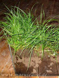 Bepflanztes Buddelaquarium für Rötelmäuse