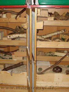 Umgebautes Schrankduo für Sinai-Stachelmäuse