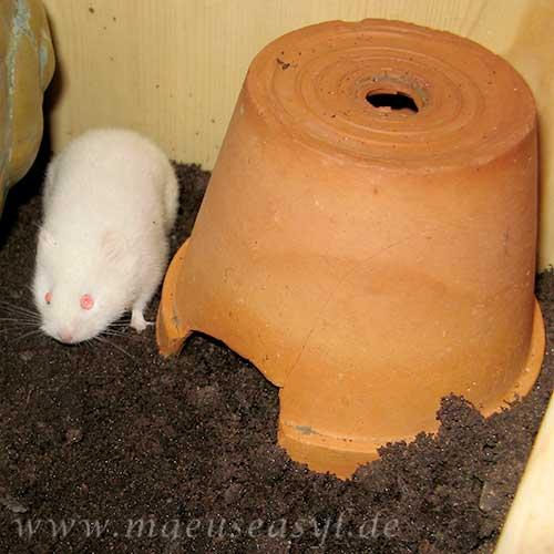 Mäusekäfig einrichten - Blumentopf