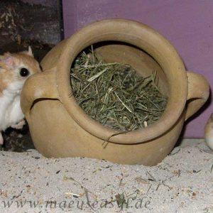 Mäusekäfig einrichten - Tonkrug