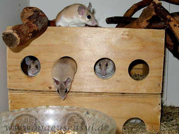 Basteln für Mäuse - Häuschen
