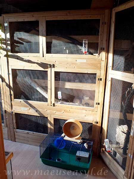 Vergleich Hamsterknast zu Eigenbau für Mäuse aus Holz