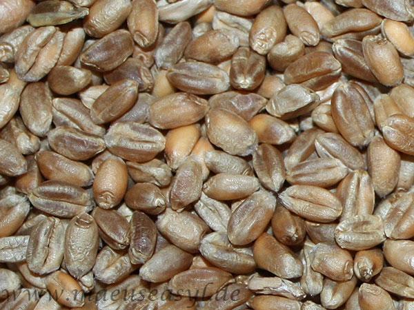 Weizen von Futterparadies