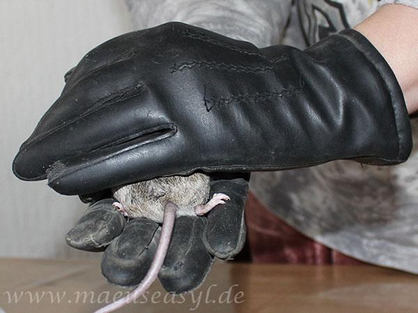 Handling mit Handschuh