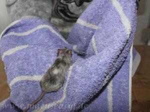 Handling mit Handtuch
