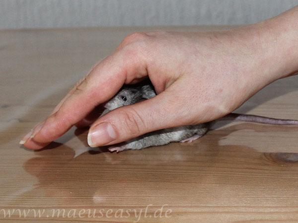 Handling: Nacken-Rückengriff