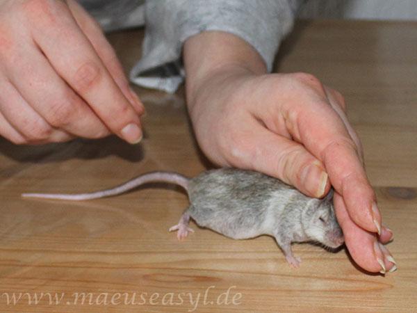 Handling: Nackengriff + Schwanzwurzel
