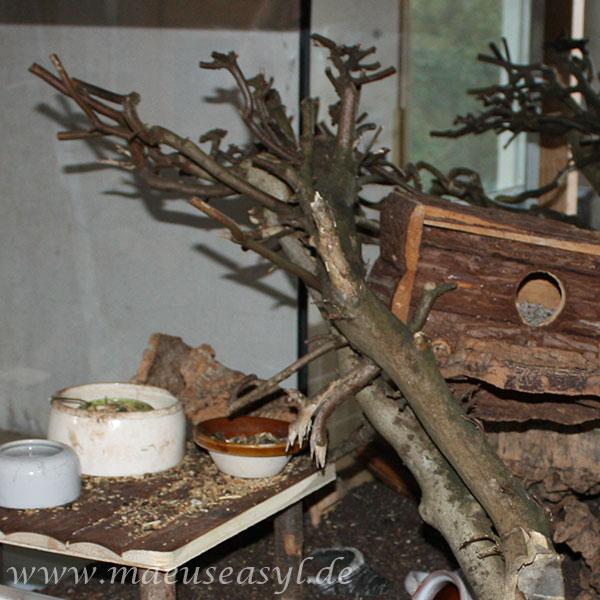 Hainbuche: Ast im Naturterrarium