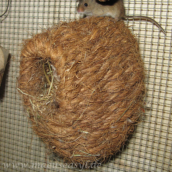 Finkennest aus Kokosfaser