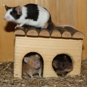 Holzhaus für Mäuse