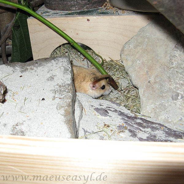 Steine im Wüstenterrarium