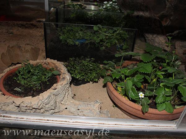Topfpflanzen im Wüstengehege