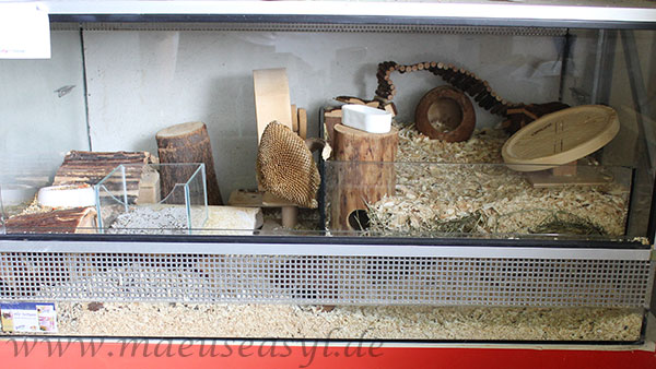 Pflegeterrarium mit Kaktusmäusen