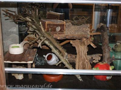 Terrarium Eigenbau für Rötelmäuse