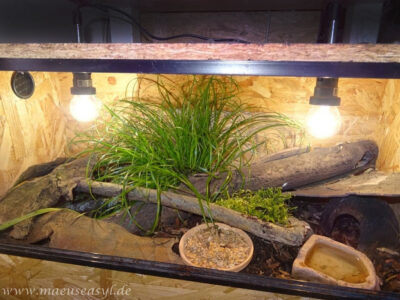 Mini-Terrarium für Knirpsmäuse