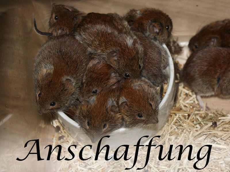 Alles über die die Anschaffung von Mäusen im Mäuseasyl