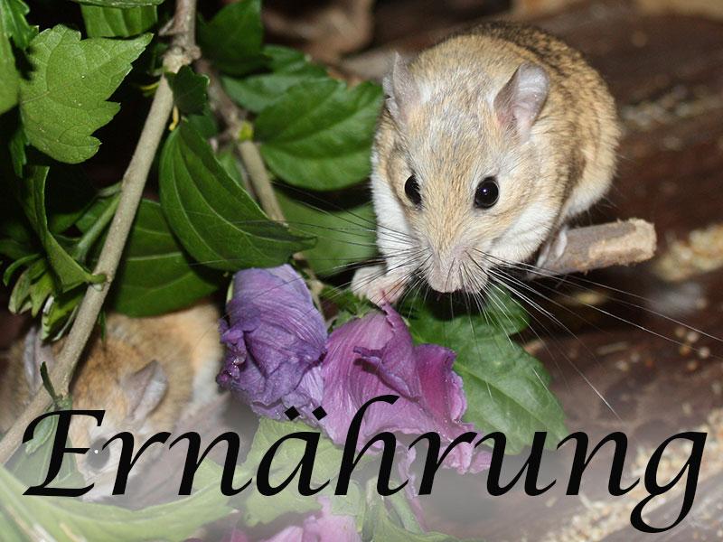 Alles über die Ernährung von Mäusen im Mäuseasyl
