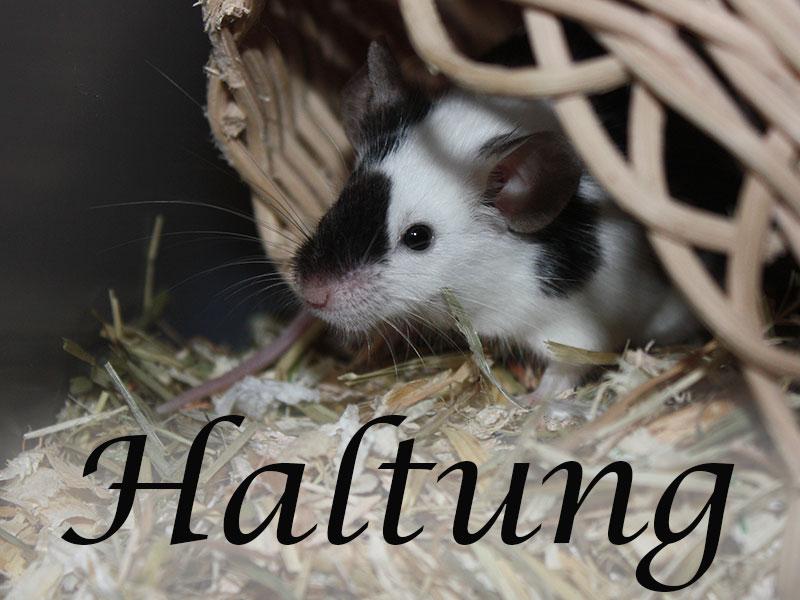 Alles über die Haltung von Mäusen im Mäuseasyl