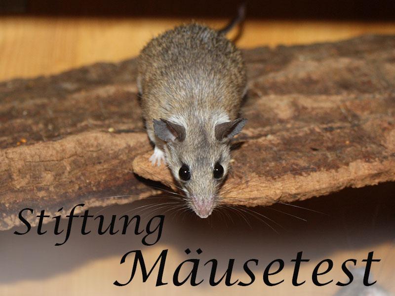 Alles über Tests von Futter bis Zubehör im Mäuseasyl