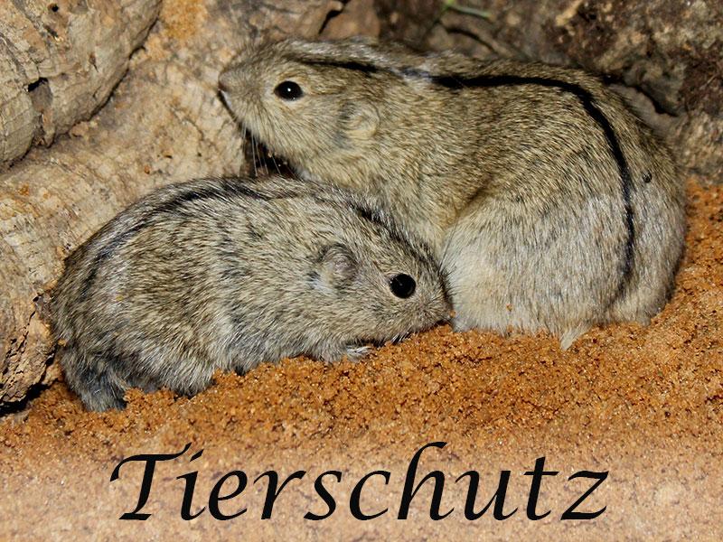 Alles über Mäuse im Tierschutz im Mäuseasyl