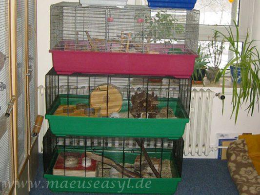 Gitterkäfige für Mäuse