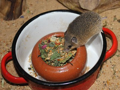 Topf als Inventar für Mäuse