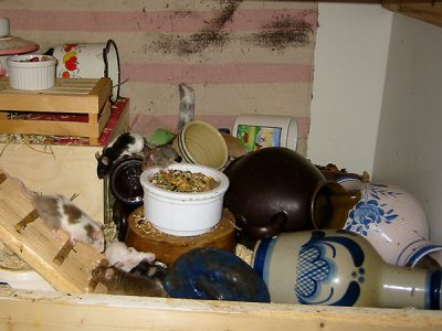Geschirr als Häuschen für Mäuse