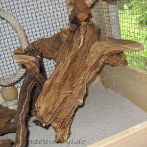 Savannenholz-Wurzel